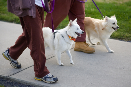 Inmates walking Eskies; Photo by PAUL CHAPLIN, The Patriot-News